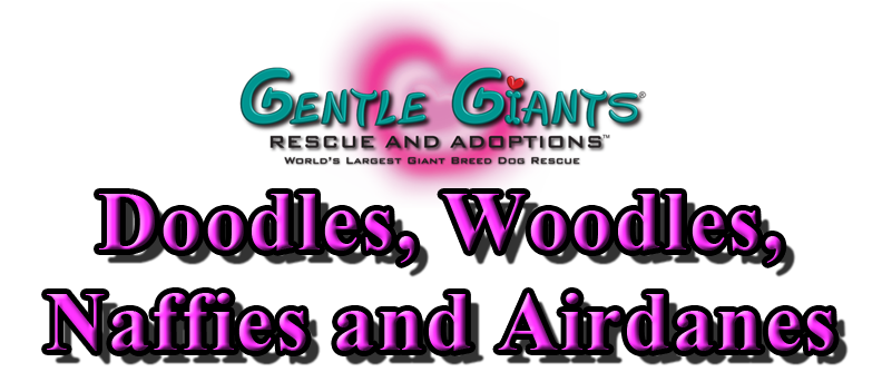 Doodles, Woodles, Naffies and Airdanes at Gentle Giants Rescue and Adoptions